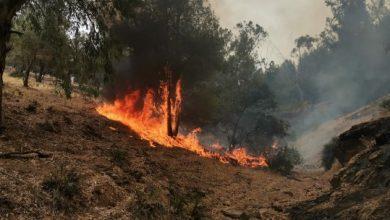 صورة خنيفرة .. حريق يأتي على مساحة مهمة من اشجار الصنوبر الحلبي بجبل با موسى