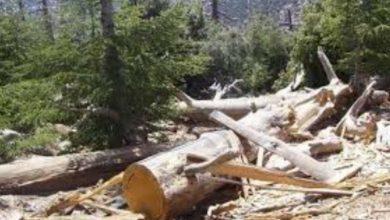 صورة عدوى تخريب الغابات تعود إلى جبال الأطلس المتوسط بخنيفرة .
