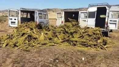 صورة درك وزان يضبط أزيد من 50 طن من القنب الهندي و كمية مهمة من مخدر الشيرا